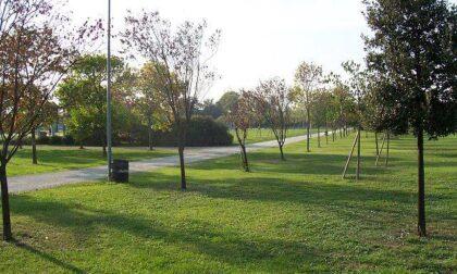 Webinar: I nuovi Criteri Ambientali Minimi per l'appalto di gestione del verde urbano