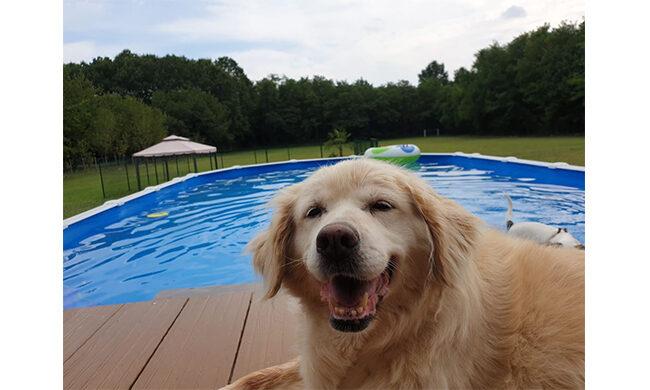 Beverly Dogs, un'oasi di felicità a misura di cane
