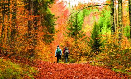 Autunno nei boschi